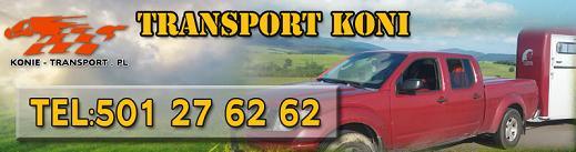 transport koni krakow